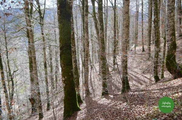 Excursión a la Selva de Irati (Navarra), el segundo hayedo más grande Europa