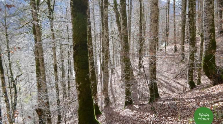 Selva de Irati