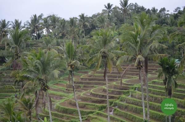 Terrazas de Jatiluwih  - Qué ver en el norte de Bali