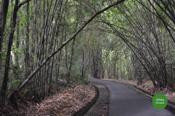 este de bali Pura Gunung Kawi Tirta Empul el templo madre de Besakih, la cascada Tukad Cepung el templo Pura Kehen Penglipuran y su bosque de bambú bali indonesia
