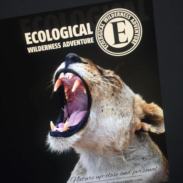 Ecological Adventure Flyer/ Brochure
