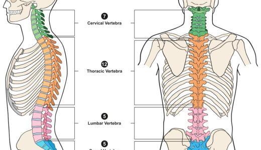 首の役割と首痛の種類・症状