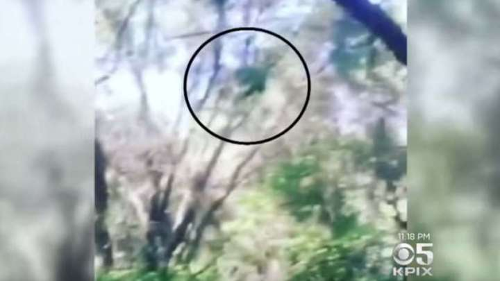 Authorities warn of the presence of a mysterious creature in a California forest
