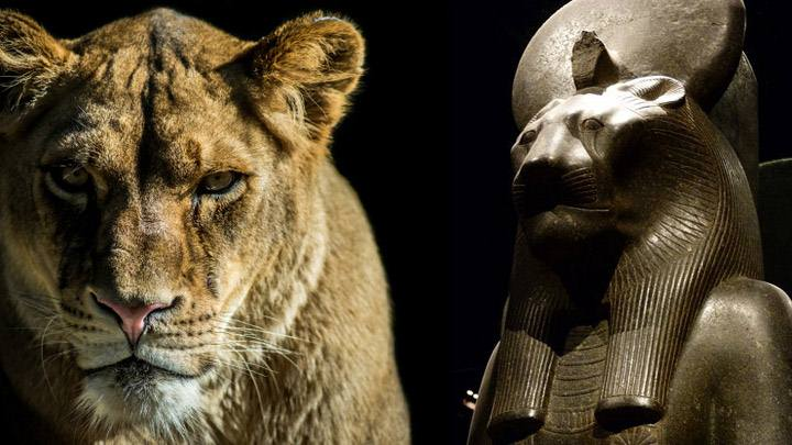 A Mummified Lion is discovered in Saqqara, Egypt