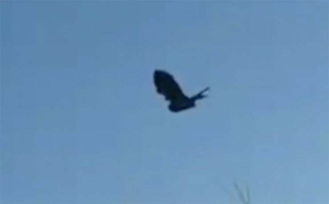 A glitch in the Matrix: A still raven recorded in the sky