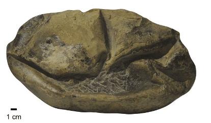 fossil egg