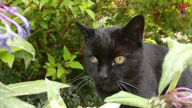 Tabitha the cat