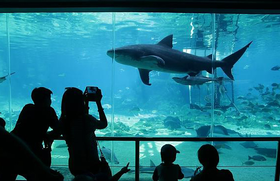 Gold Coast theme parks are amongst Australia's top tourist attractions of all time!