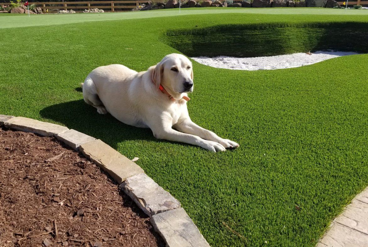 dog pet grass