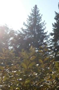 künstliche Sonne mit einer Tageslichtlampe ersetzt die Morgensonne