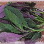 金時草(キンジソウ)の食べ方と、その栄養・効能は?
