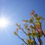 残暑見舞いの時期と返事の書き方 季節が過ぎたらどうする?