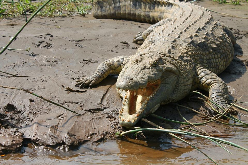 Pastor přikřtu usmrcen krokodýlem. Opravdu?