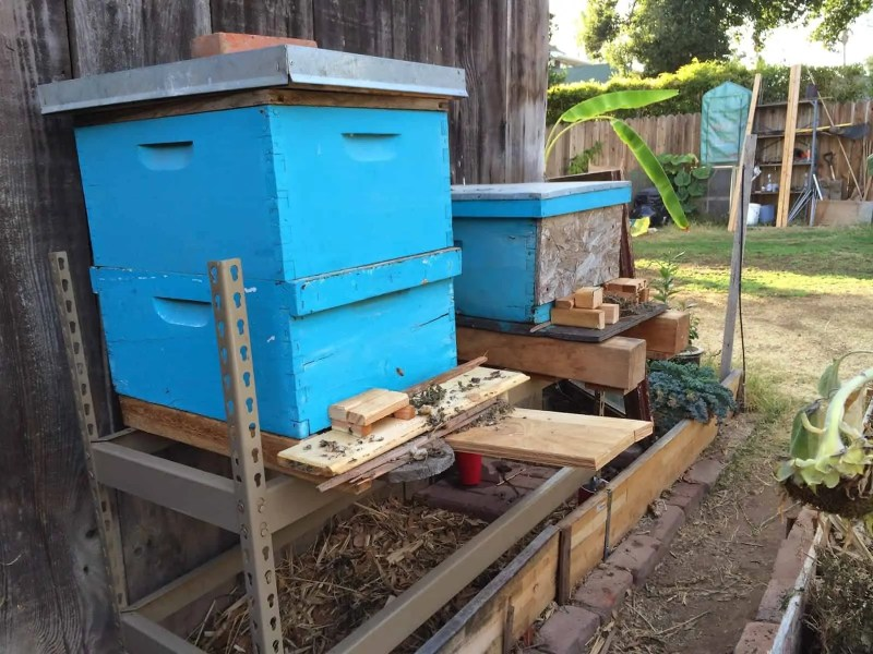 Happy Bees in their back yard beehives