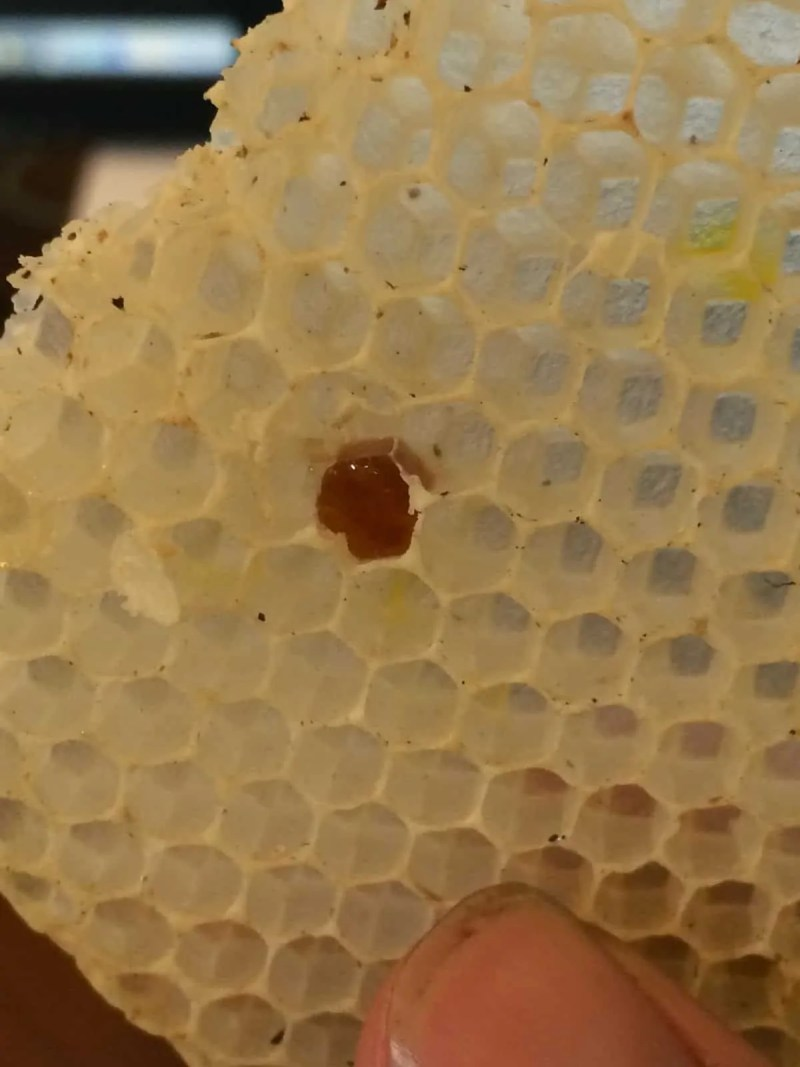 The bees had almost no stores of honey