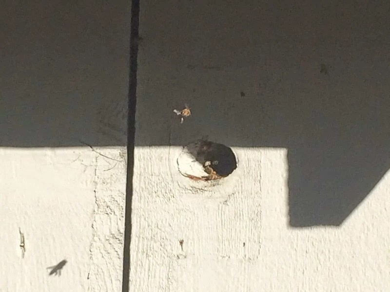 Bees found a natural sized entrance to a good spot for a hive!