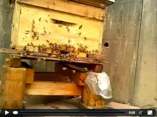 orientation-signal-corner-hive