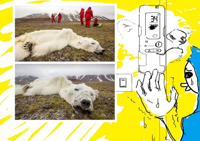 北極熊-660x466