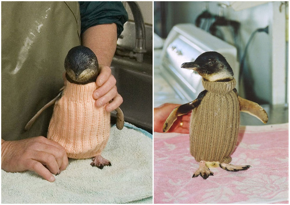 adaymag-knit-a-sweater-save-a-penguin-07