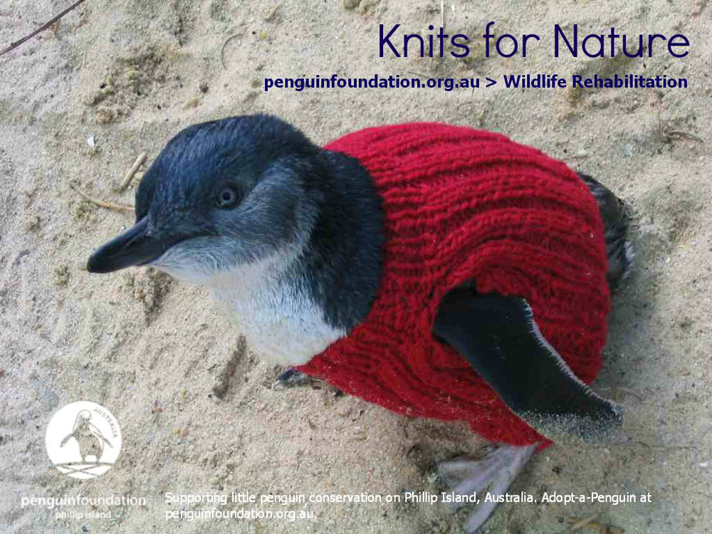 adaymag-knit-a-sweater-save-a-penguin-10