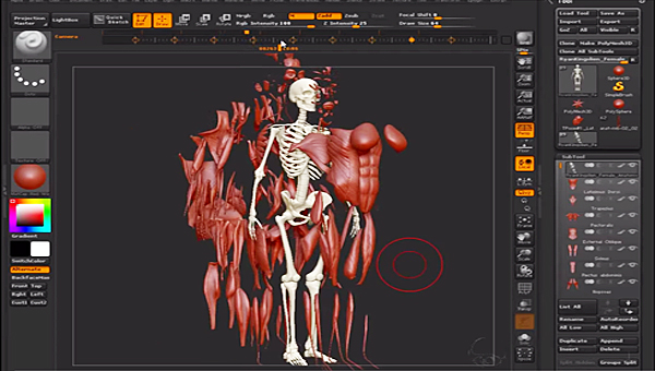 0452-ZBRUSH-HUMAN-ANATOMY-FIGURE-TUTORIAL
