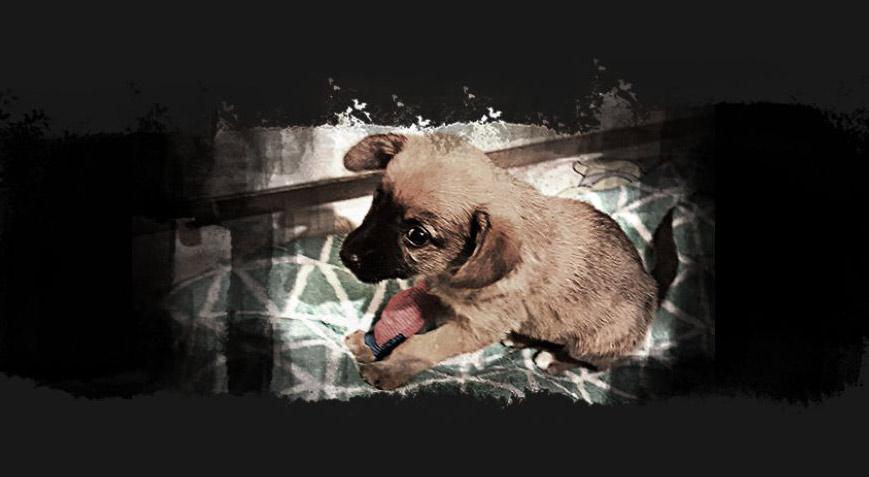 Der anonyme Tierhandel fordert jedes Jahr zahllose Opfer.