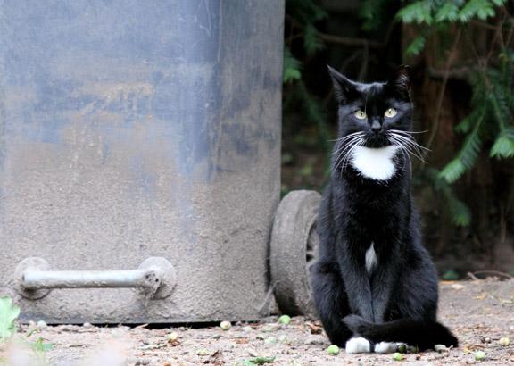 Über zwei Millionen Streunerkatzen gibt es in Deutschland.