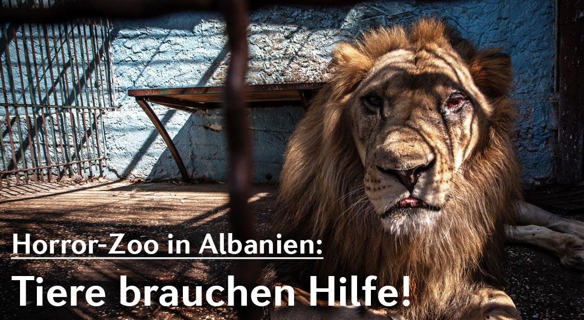 Schreckliche Zustände im Safari Park Zoo in Fier (Albanien).