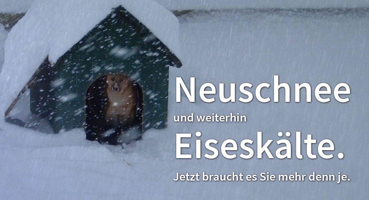 Bitte helfen Sie den Hunde über den Winter.
