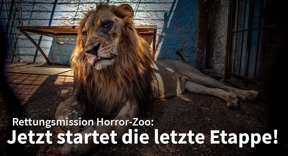VIER PFOTEN befreite die Löwen aus dem Safari Park Zoo in Fiers, Albanien.