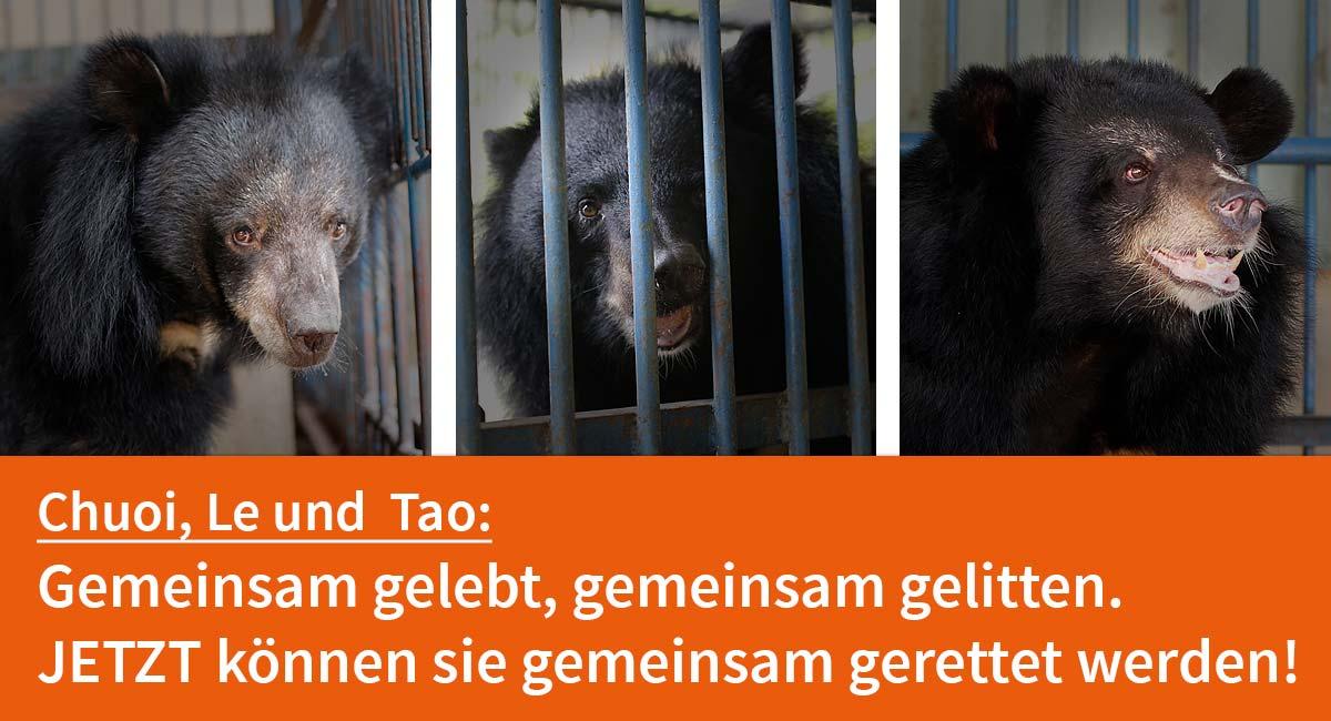 Helfen Sie Bären in Not!