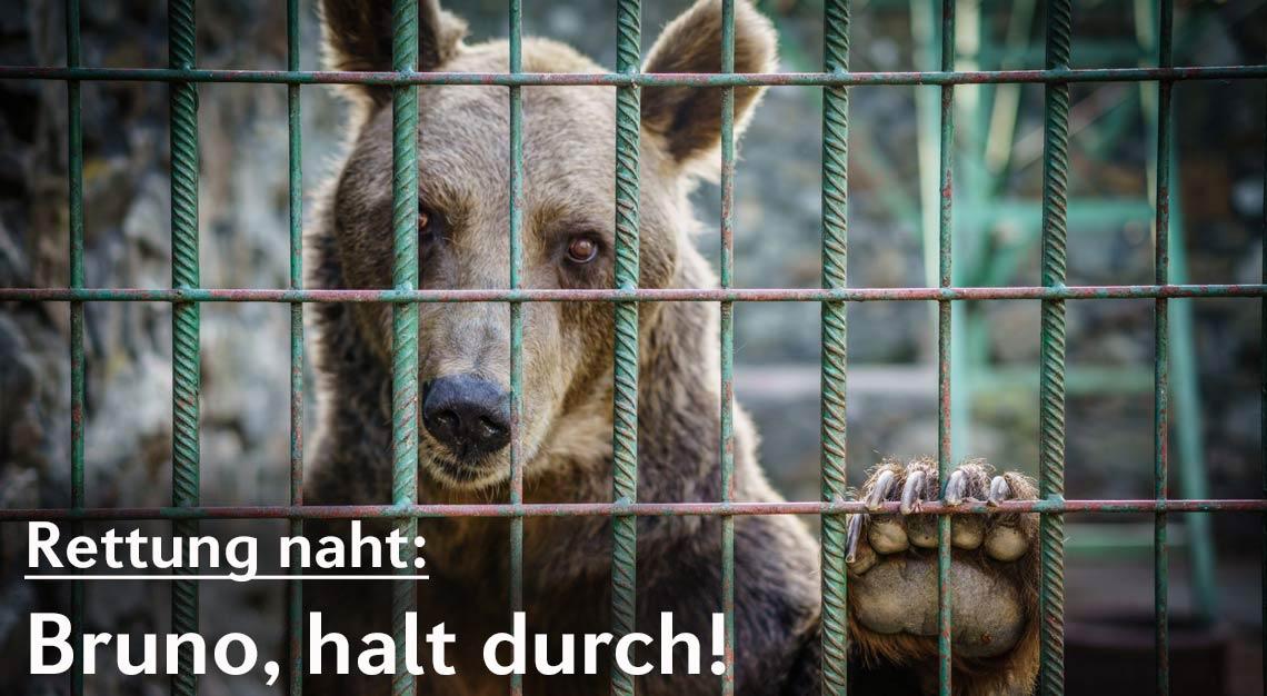 © Helmut Wachter | VIER PFOTEN