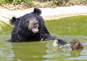 Bärenglück im BÄRENWALD Ninh Binh