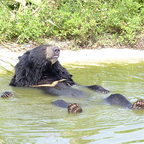 ...heute ein Bär mit artgemäßem Leben