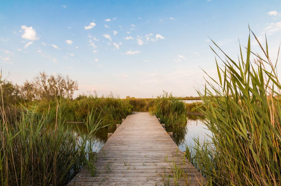 Discovering the Camargue in summer