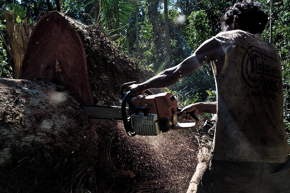 Solo 2019 la selva peruana perdió 161.265 hectáreas de bosques.