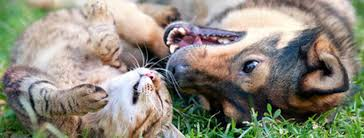 Castración canina y felina