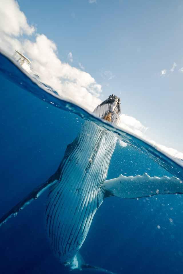 photo of whale underwater. Marina