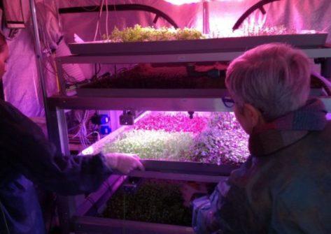 orto su marte-orto marziano-coltivazioni nello spazio-oman DESERTO