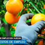 recogida de cítricos en Huelva