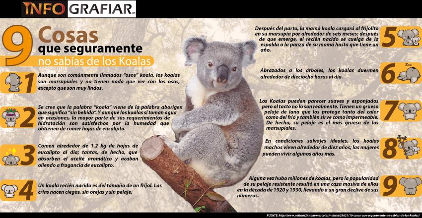 9 Cosas que seguramente no sabías de los Koalas