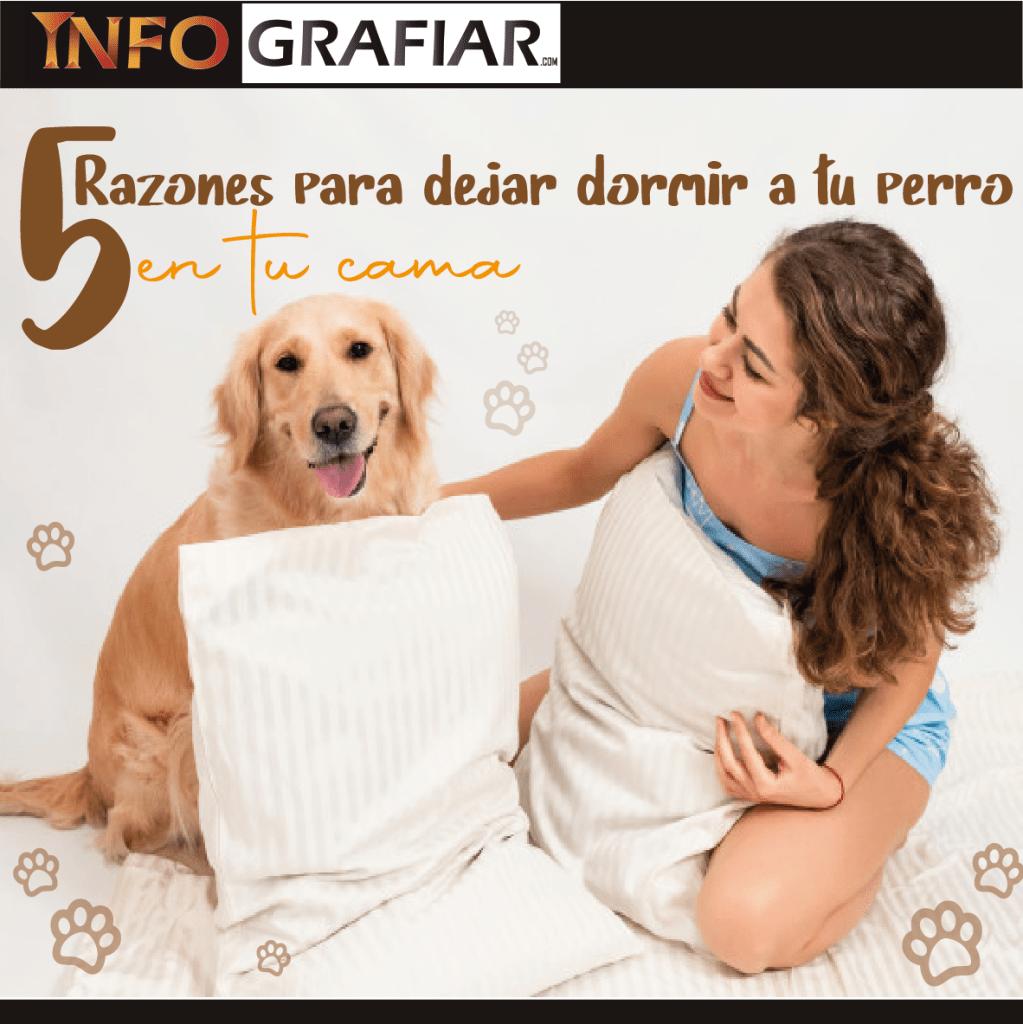 5 Razones para dejar dormir a tu perro en tu cama