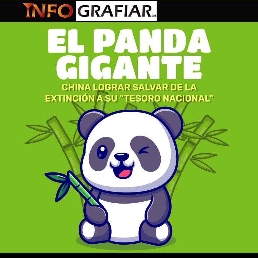 ¿Cómo hizo China para lograr salvar al panda gigante?