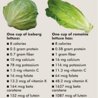 Infographic: Iceberg vs. Romaine Lettuce