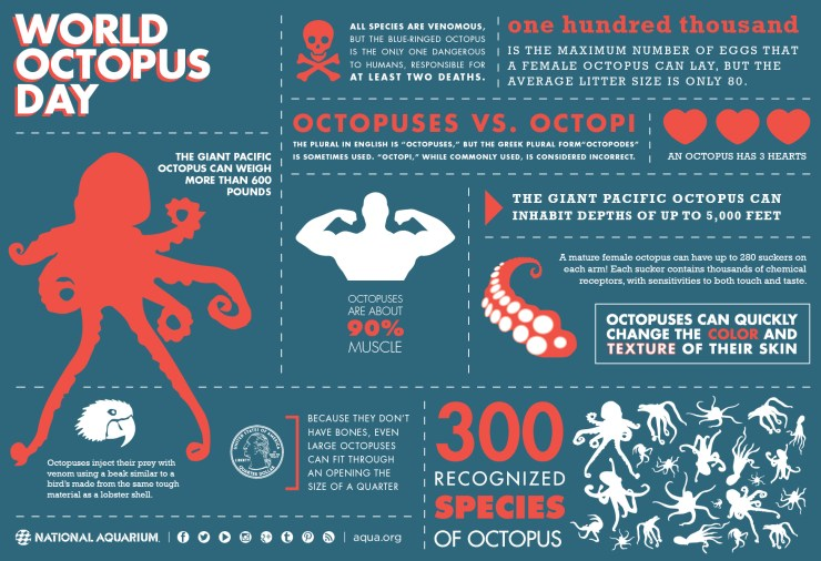 world-octopus-day