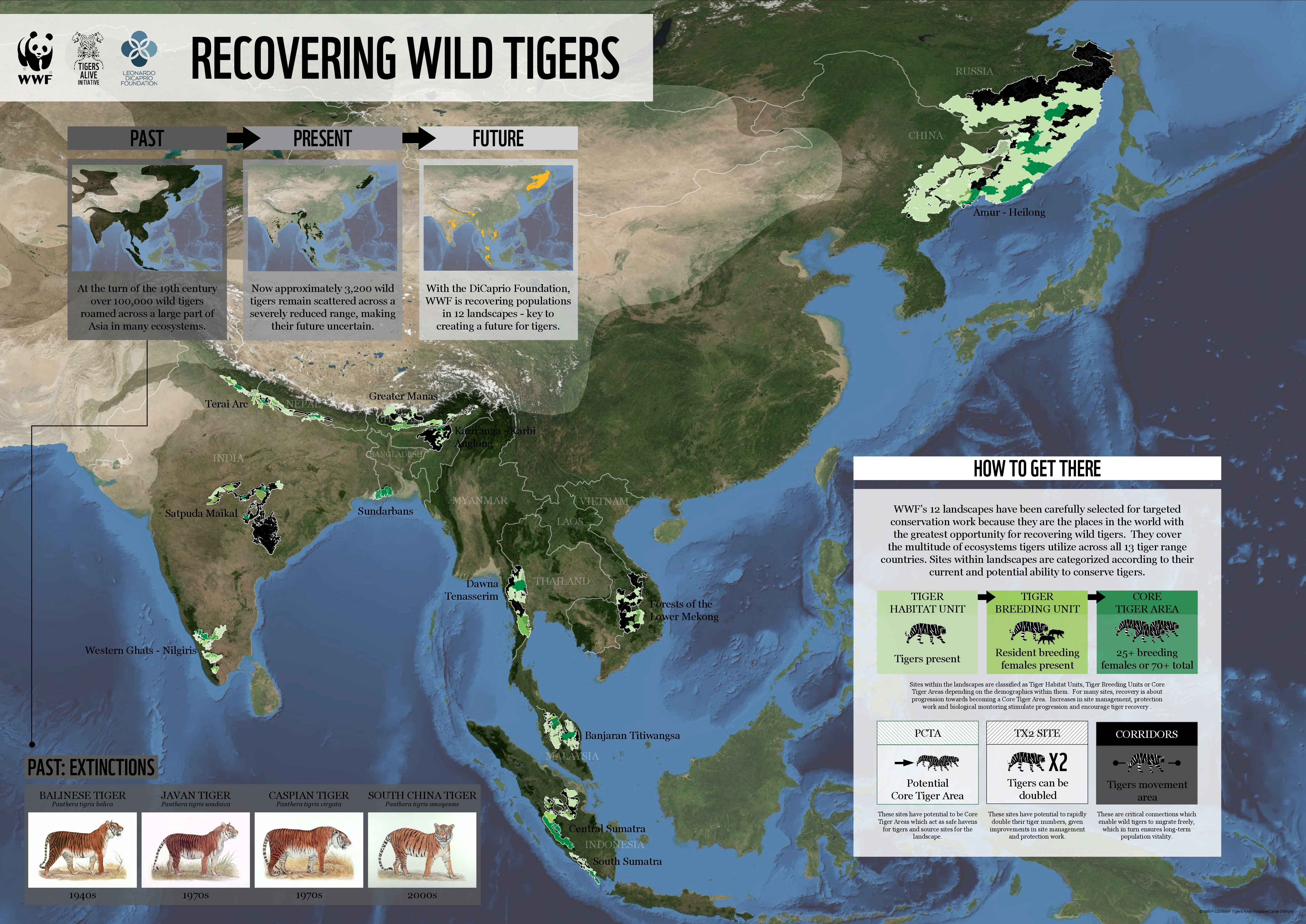 Recovering Wild Tigers [INFOGRAPHIC] #wild #tigers ...