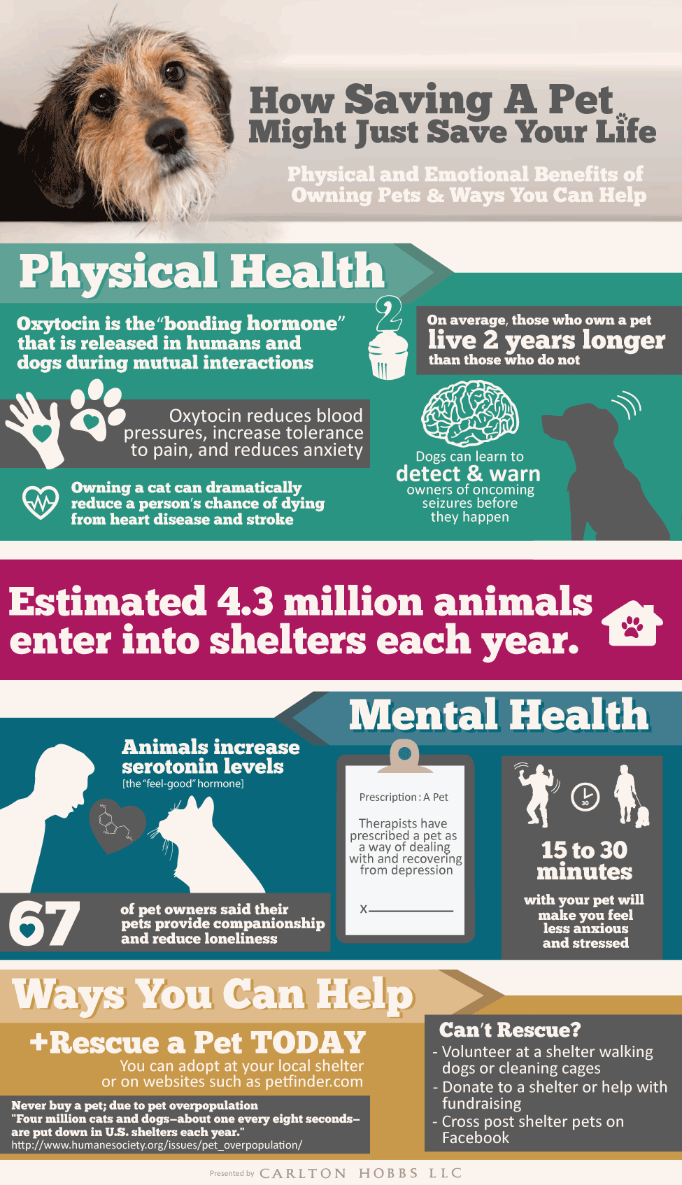 How Saving A Pet Might Just Save Your Life