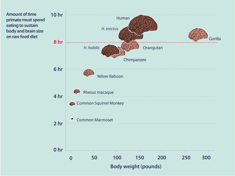 Food In Human Evolution INFOGRAPHiCs MANiA