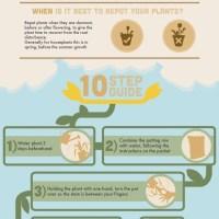 Repotting Houseplants Tips