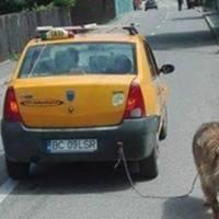+RETARD: Şofer de căruţă face taxi la Bacău!